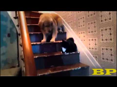 Best Cat Vines Compilation ♦ compilación de vídeo divertido | World Vevo sdks