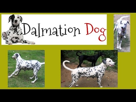 Little dalmatian lets play alone ESK TV