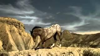 Самое красивое видео про лошадей  ))(, 2015-11-19T12:51:49.000Z)
