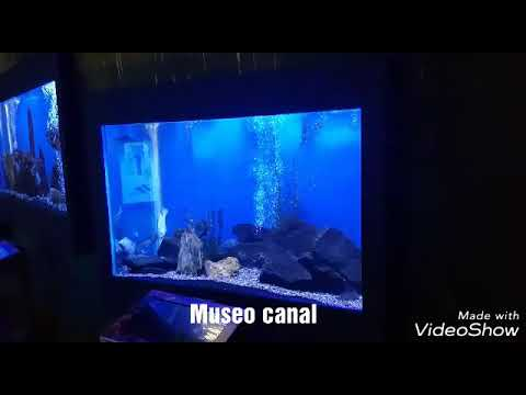 Museo canal de panama. Parte 2