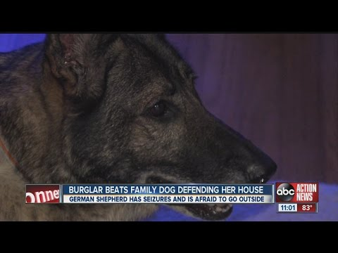 Family dog beaten with wine bottle during burglary, suspect charged