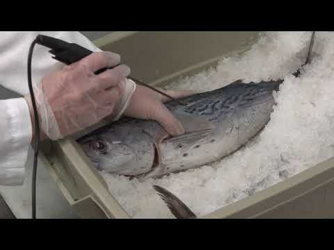Preventing Scombrotoxin (Histamine) Poisoning On A Fishing Vessel (Closed Captioned)