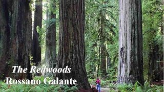 The Concord Band - The Redwoods - Rossano Galante