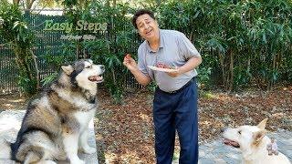 Sheru & Bruno Eating Strawberries | Alaskan Malamute | German Shepherd | Dogs Eat Strawberries
