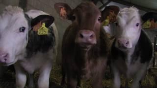 Reportage filière viande Artisans Gourmands de Bretagne 2017