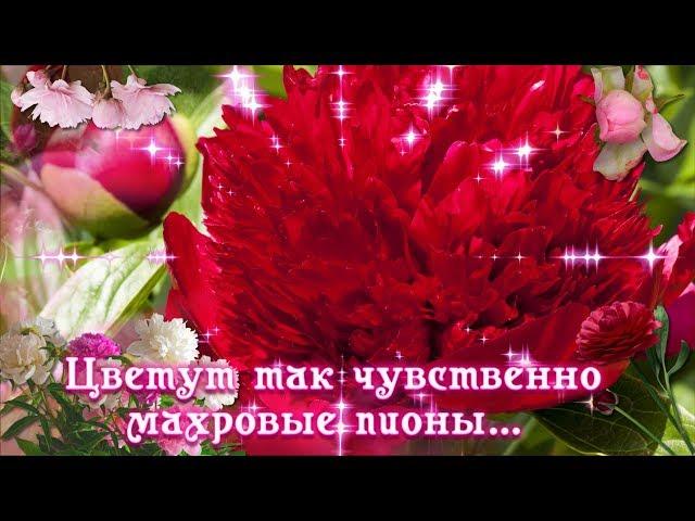 Смотреть видео Цветут так чувственно махровые пионы ...