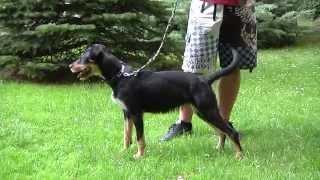 ÚSTÍ N. L.: Nabídka psů z útulku