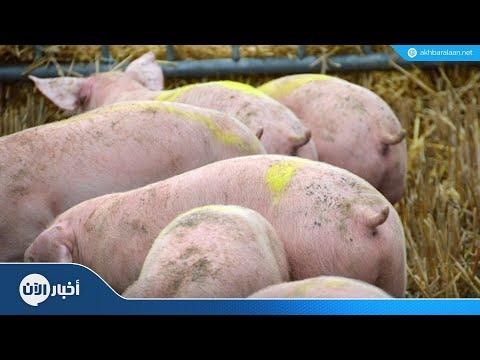انتشار إنفلونزا الخنازير الأفريقية بالصين  - 10:55-2018 / 11 / 16
