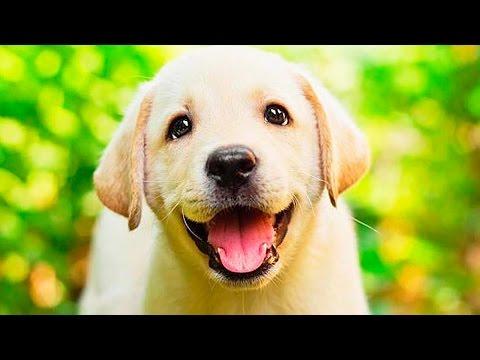 Большая собака в квартире: 10 простых правил содержания