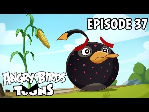 Angry Birds Toons | Clash of Corns - S1 Ep37
