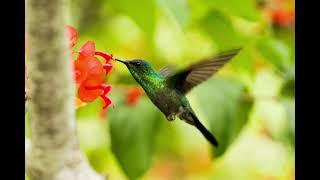 Suara burung & Alam Bikin tenang & rileks - Instrument penghantar tidur,relaksasi belajar & Yoga