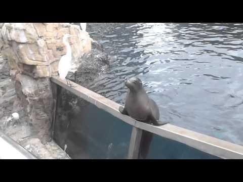 SeaLions at florida! 2010