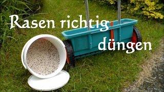 Anleitung Rasen richtig düngen - Wie Rasen düngen? So wirds gemacht Rasen düngen Blaukorn