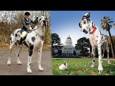 THE BIGGEST PETS In The World