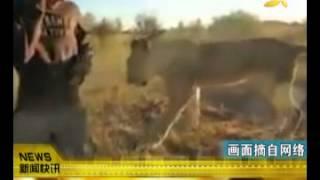 CQTV:被抛弃后获救 母狮亲密拥抱恩人 thumbnail