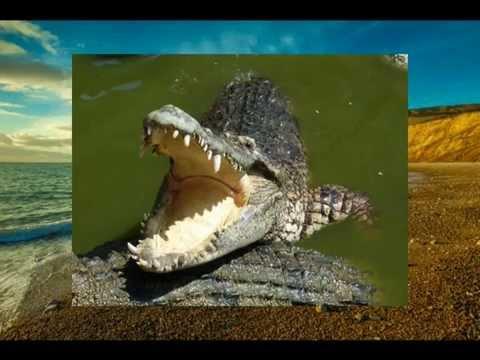 Traumdeutung Zähne ausfallen - - - Zahnverlust - Zähne fallen aus - Zahnausfall - beißen