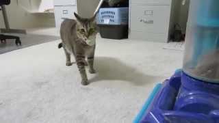 Симулятор охоты для домашней кошки!!! Monkey the Cat Hunts for Dinner