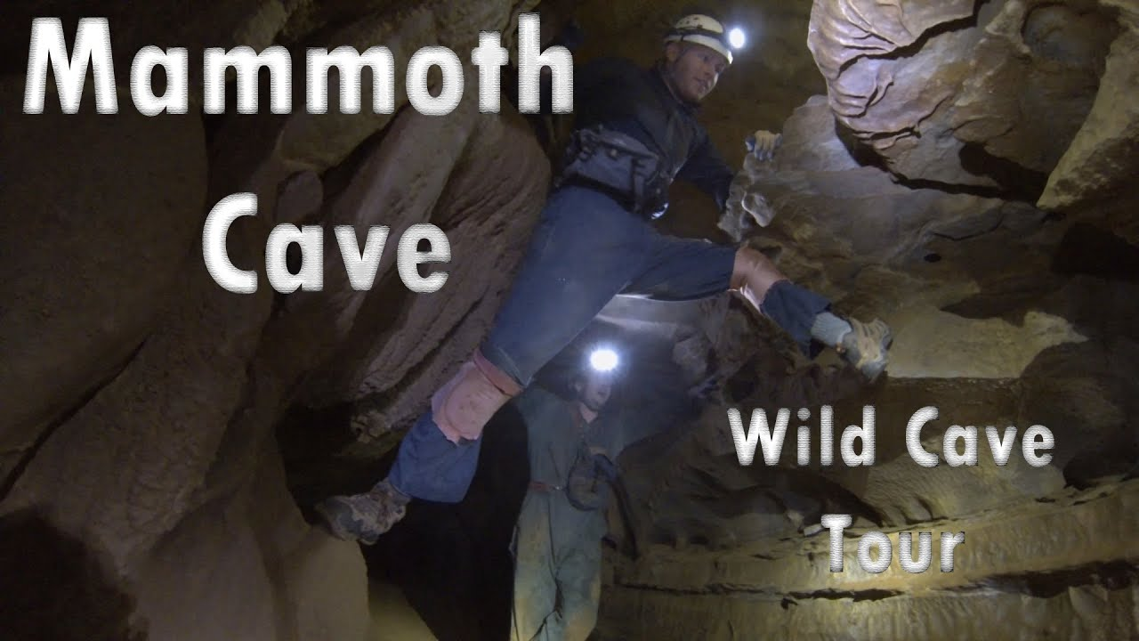 Mammoth Cave Which Cave Tour