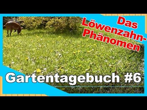 Gartentagebuch #6 | Blühender Garten voller Unkraut | paradoxes Löwenzahn-Phänomen | neue Ansaaten