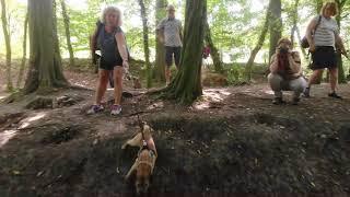Nederlandse Border Terrier Club