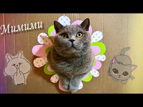 Умный Британский КОТ . Фото салон Photo salon for British cat
