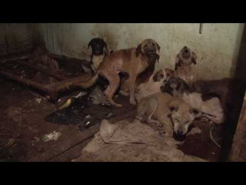 17 Dogs Rescued from Squalor