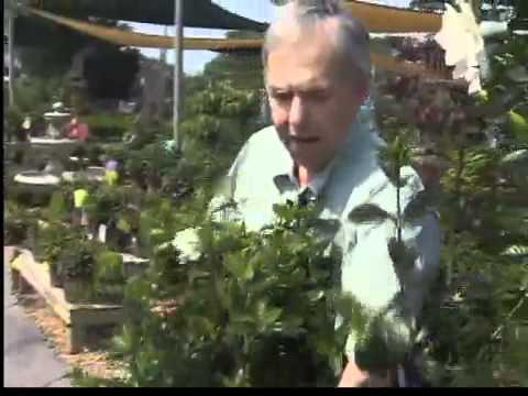 Dabney Morgan Gardening Tips - 5/30
