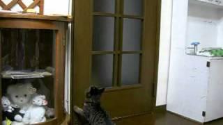 ドアを開ける猫&閉める猫 thumbnail