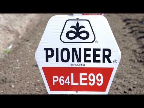 Corteva Pioneer Prilog 09 Suncokret LE99