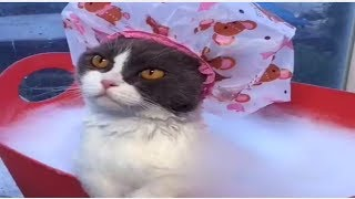 CAT FUNNY BATH VIDEO | ANIMAL FUNNY VIDEO | PET FUNNY VIDEO | FUNNY CAT COMPILATION