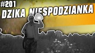 Darz Bór odc 201 - Dzika niespodzianka na traperskim polowaniu