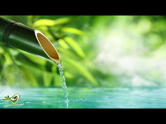10 Hours of Relaxing Music  - Calm Piano Music, Sleep Music, Water Sounds, Meditation Music