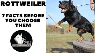 Before you buy a dog  ROTTWEILER  7 facts to consider! DogCast TV