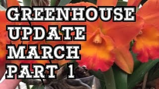 MARCH GREENHOUSE UPDATE PART 1: SPRING TIME ORCHID BLOOMS