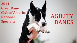 Great Dane Agility Highlights - 2014 GDCA National Specialty