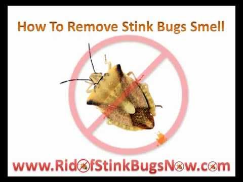 how to get rid of stink bugs smell youtube. Black Bedroom Furniture Sets. Home Design Ideas