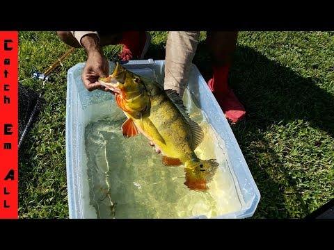 MONSTER FISH KEEPERS AQUARIUM! Mutant Fish! New Pet Exotic Pool Pond Transport