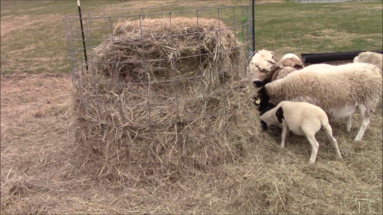 How to make a round bale hay feeder (CHEAP)