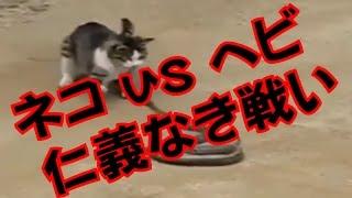 動物バトル 猫 vs ヘビ【野生動物同士の仁義なき戦い!】 ・Youtubeで合...