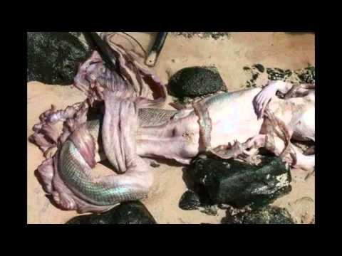 A Mermaid Found Dead At The Beach of Indian Ocean,gujrat ...