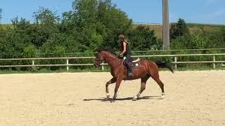 Chacco Belle mit ihrer neuen Reiterin