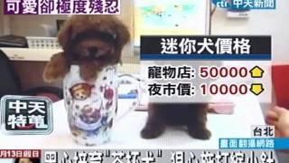 中天新聞》茶杯犬是從日本流傳進來的迷你狗狗,小到可以放進茶杯裡,十...