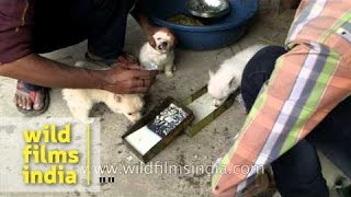 Dog Traders Feeding Puppies Before Sale