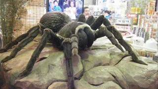World`s Biggest insect 2