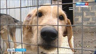 ГТРК Белгород - Волонтеры региона помогают бездомным животным