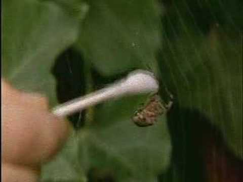 Spiders On Drugs from YouTube · Duration:  1 minutes 51 seconds