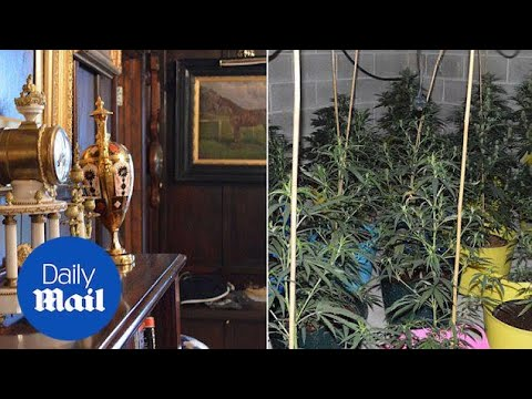 Antiques and cannabis: Police reveal inside Yeoman's Manor home - Daily Mail