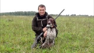 Охота с Курцхаарами - опытными и первопольными
