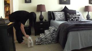 Petstairz Foam Pet Stairs Demo Featuring Cartier On The 4 Step Zebra Pet Steps