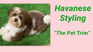 Havanese Puppy Trim